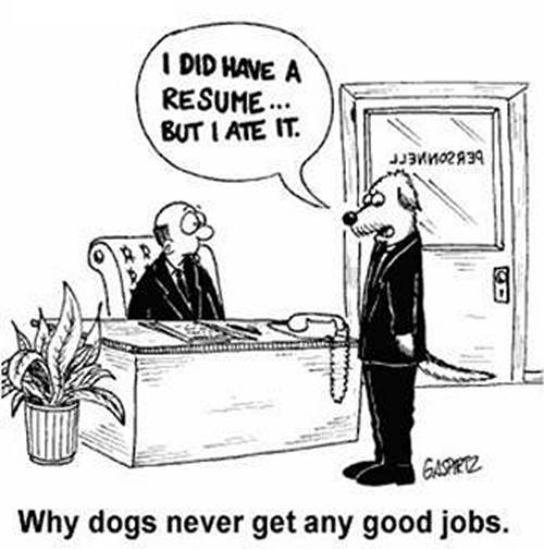 Dog Cartoon, Resume!